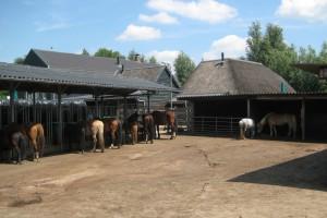 Paarden op de plaat